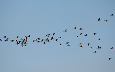 Balade ornithologique au lac de Puydarrieux